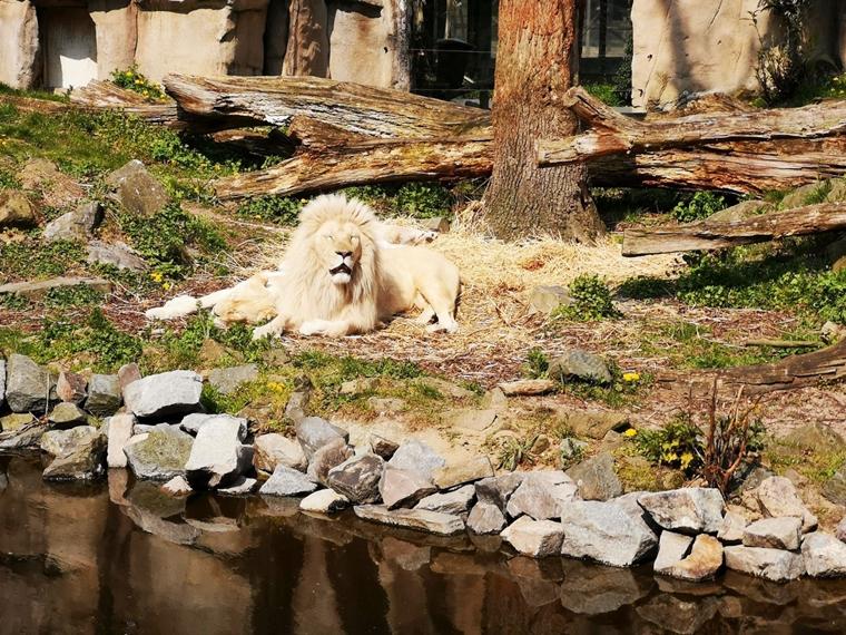 topparken landgoed de scheleberg ervaring 12 - Personal | Een weekendje weg @ TopParken Landgoed de Scheleberg