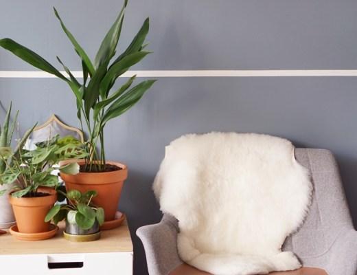 kind- en diervriendelijke planten tips