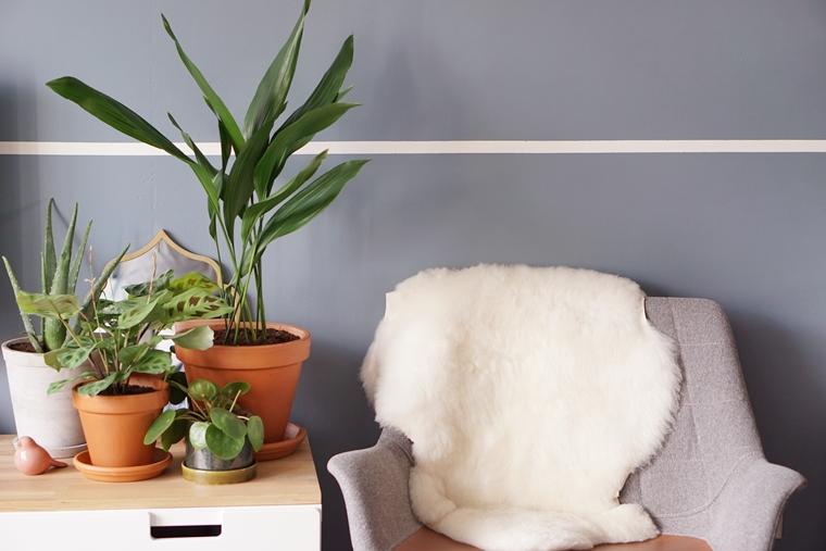 diervriendelijke planten tips 2 - Home | Tips voor kind- en diervriendelijke planten