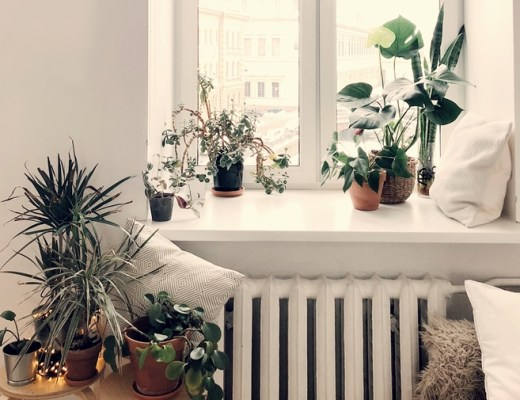 kamerplanten in de winter tips