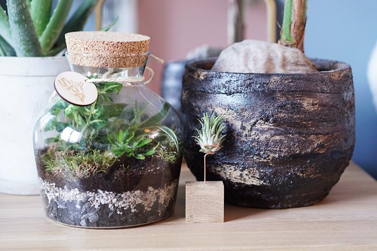 planten terrarium ecosysteem maken diy 2 - DIY | Planten terrarium/ecosysteem maken