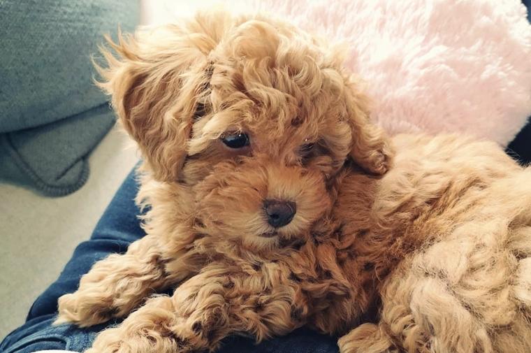 coosje puppy 6 - Puppyspam! | Coosje 7 maanden update
