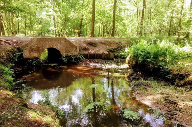 4. Kampina Oisterwijkse Vennen1  credits Alltrails - 5 verrassend mooie wandelroutes in Nederland (die nog niet zo bekend zijn)