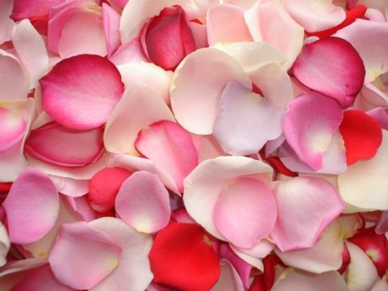 Aromatherapie - Rozenolie