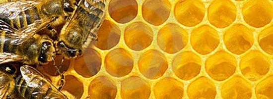 honing2 - Beauty Food | Honing