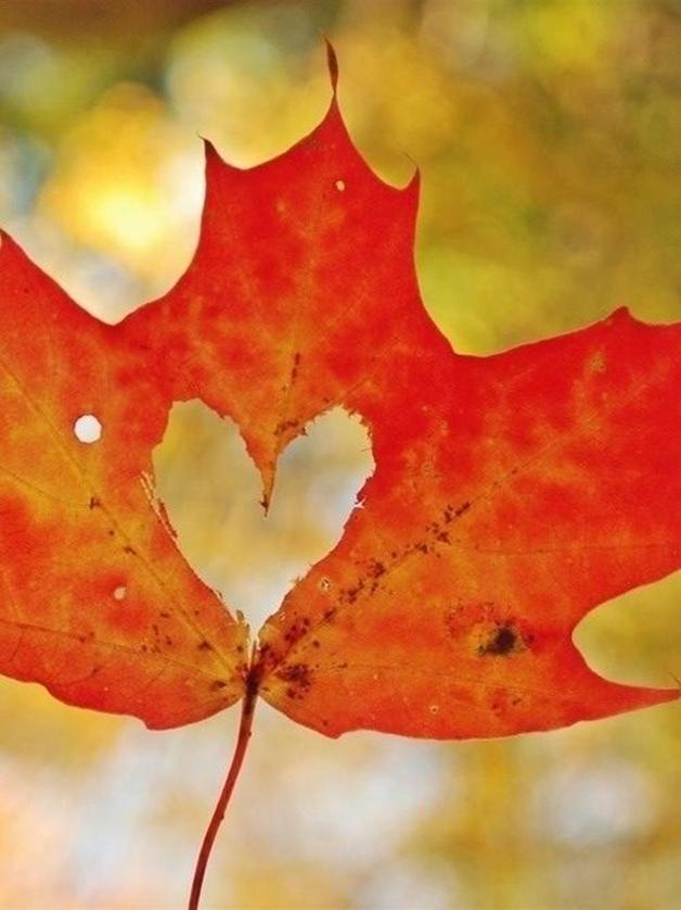 inspiratie herfst interieur 15 - Inspiratie | Herfst in je interieur