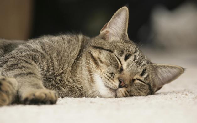 tips goede nachtrust 2 - Tips voor een goede nachtrust #1