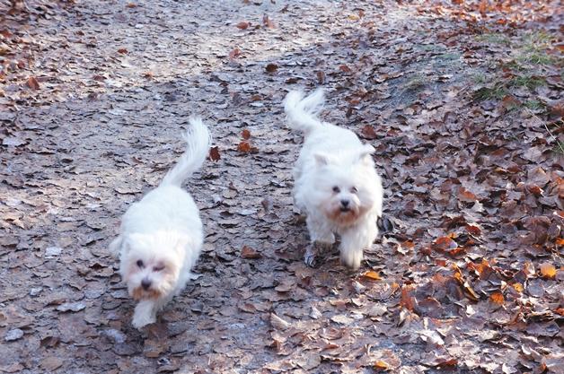 walkinthepark13 - Een winterse wandeling in Park Sonsbeek