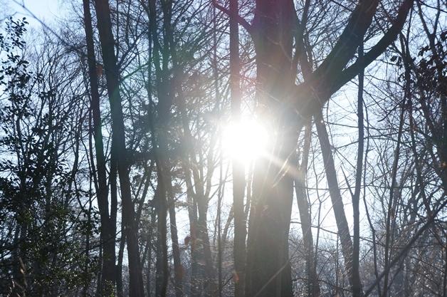 walkinthepark15 - Een winterse wandeling in Park Sonsbeek