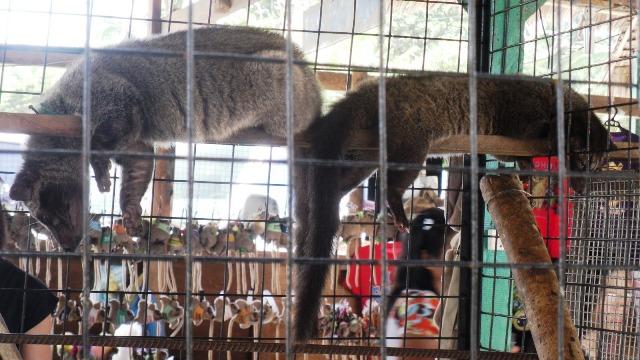 Albuquerque Zoo in Bohol