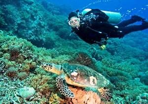 Diving in Puerto Princesa