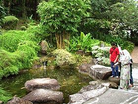Bukit Jambul Orchid Hibiscus in Penang