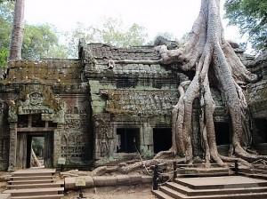 Ta Prohm in Siem Reap