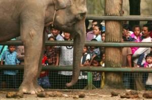 Ragunan Zoo in Jakarta