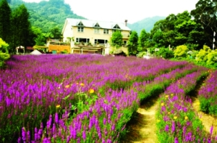 flower farm, taoyuan, taiwan