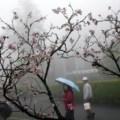 weather, chiayi, taiwan