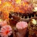 banana reef, maldves