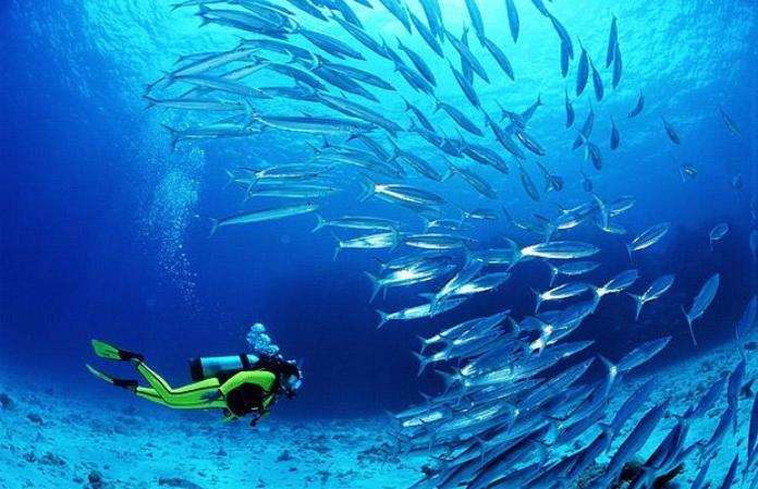 Image result for diving oman
