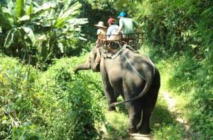 elephant trekking, samui, activitiy, thailand