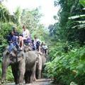 trekking, elephant, thailand, krabi