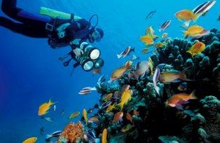 diving, aqaba, jordan,