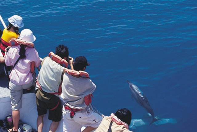 whale watching, activity, hualien, taiwan