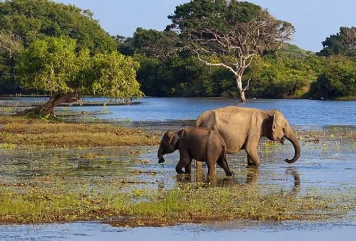 national park, sri lanka, yala park