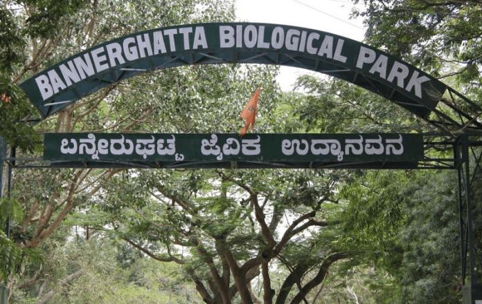 animal park, india, bangalore, bannerghatta