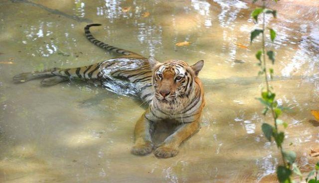 wildlife sanctuary goa, india