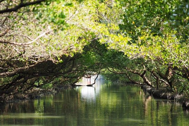 mangroves reservation, taiwan, tainan