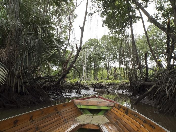 pulau ranggu, brunei, jungle