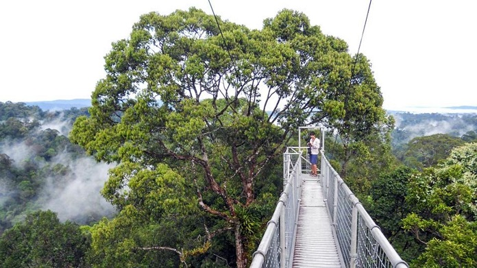 ulu temburong national park, brunei