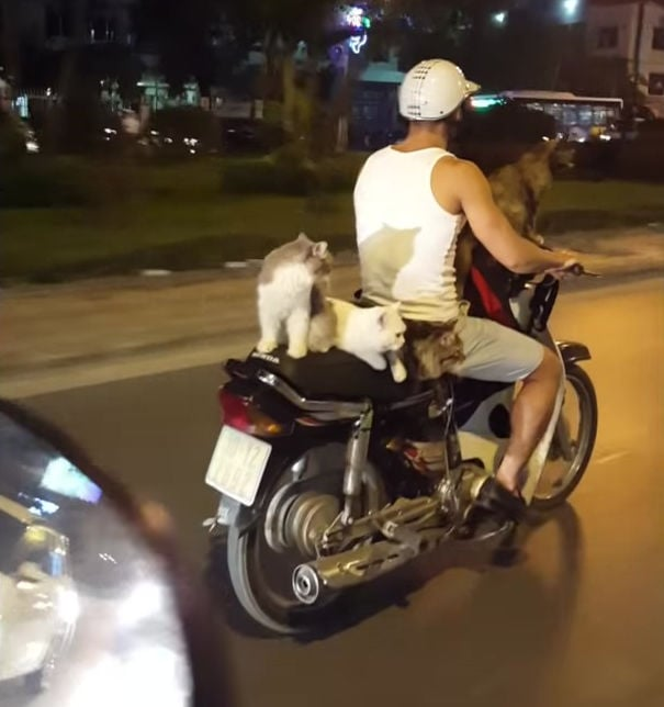 Vietnam CubCats 02