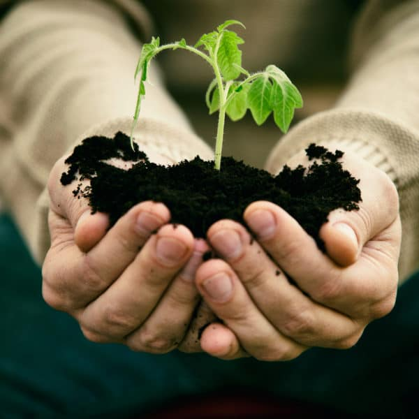 Fertile Soil is the Key to Successful Farms and Gardens