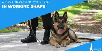 4 Tips For Keeping Your Dog In Working Shape