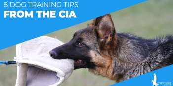 8 Dog Training Tips From The CIA