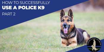 How To Successfully Use A Police K9 (Part 2)