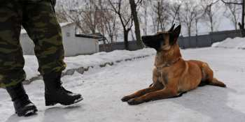6 Facts You Should Know About the Belgian Malinois as a Police Dog