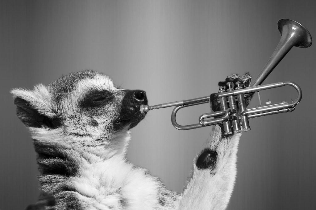 My Favourite Lemur!
