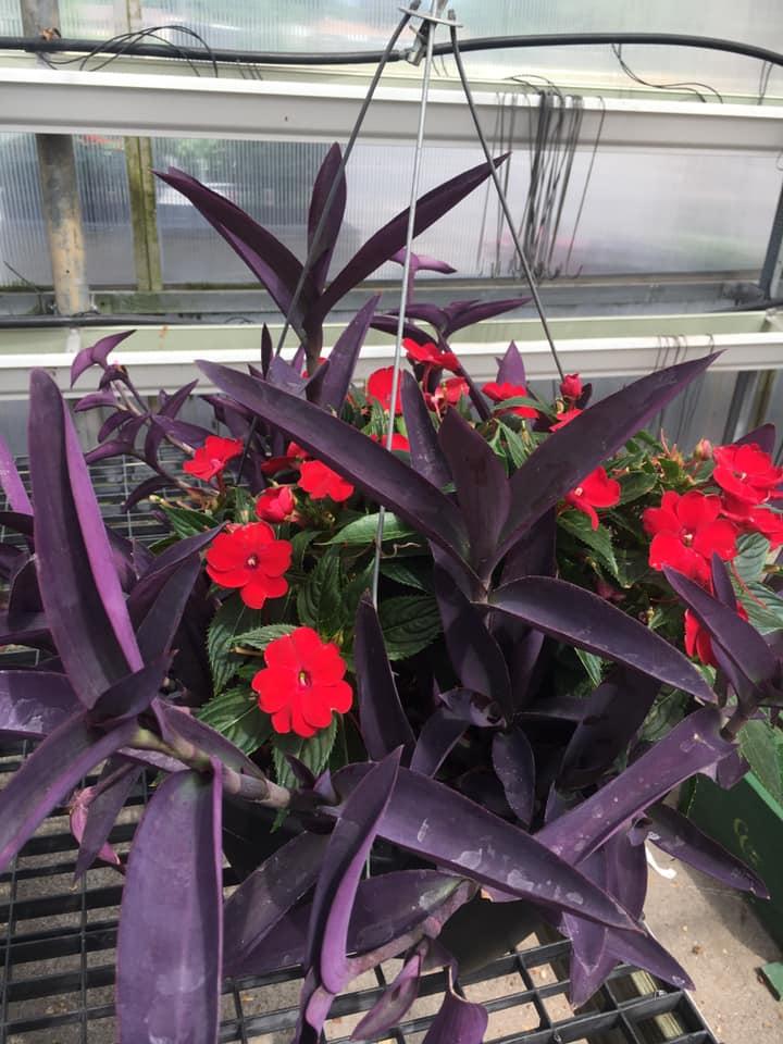 Mixed hanging basket flowers