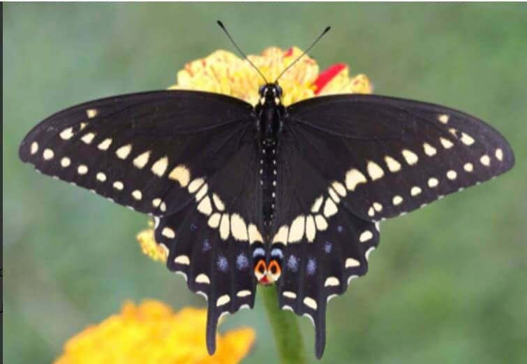 butterfly attracting plant and flower