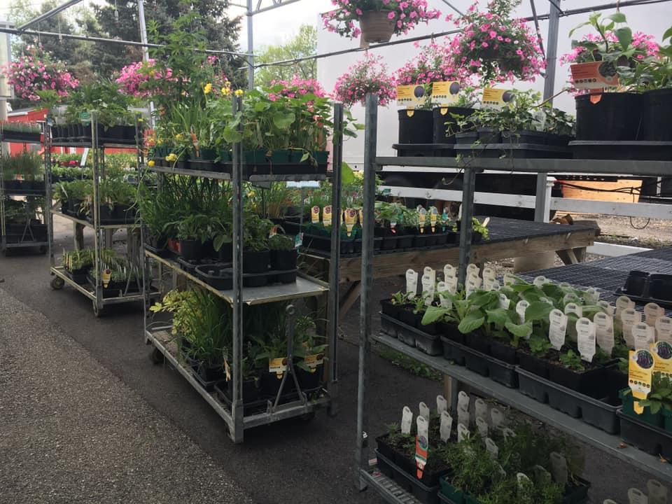 More Perennials