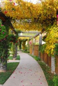 Fall Pathway