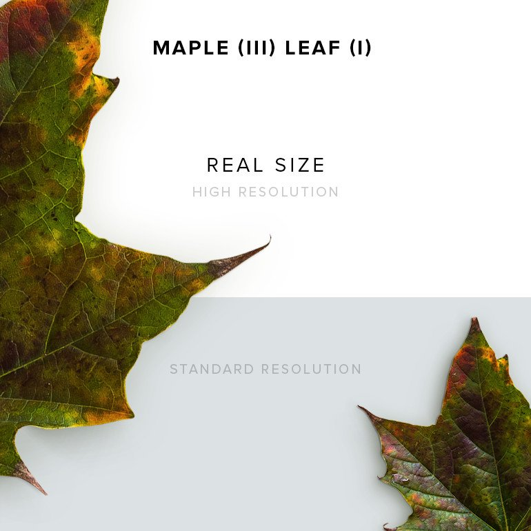 item-description-maple-3-leaf-1