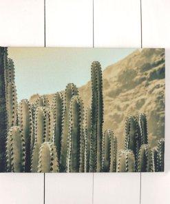 Lienzo pequeño cactus 40x30
