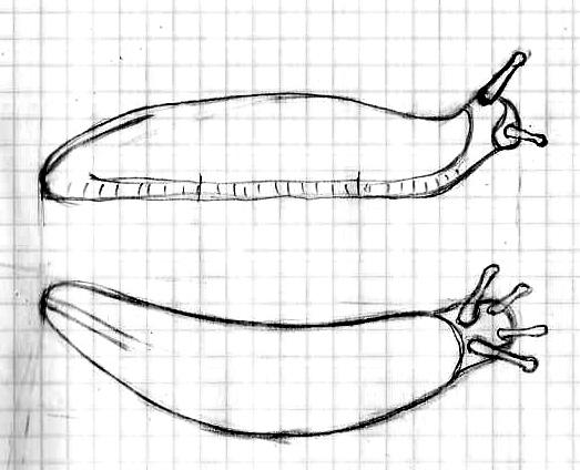 slug sketch
