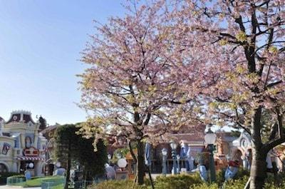 sakura04 min - 【花見】桜も楽しめる春の東京ディズニーリゾート〜2020年の開花状況は?さくら以外にどんな花があるの?