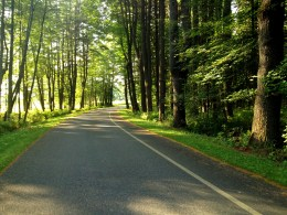 Tree-lined Road at the Saratoga National Historical Park