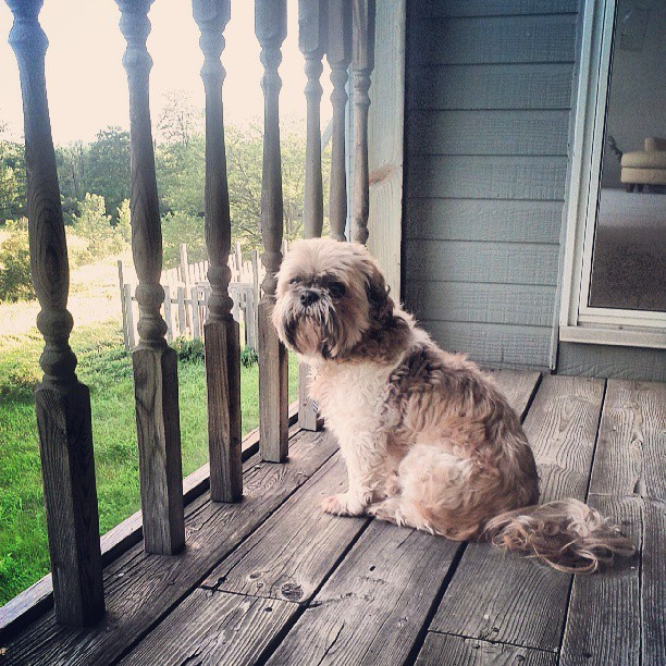 a photo of tibet the dog sitting on the back porch