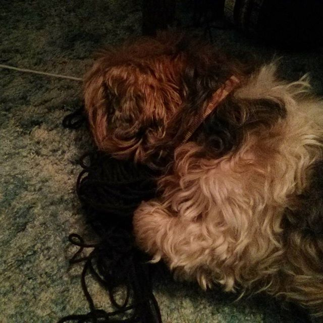 a photo of tibet the dog laying on some yarn
